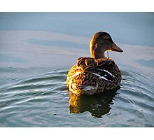Lone Duck Photographic Print