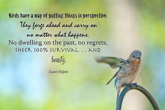 Bird have a  way of putting things into perspective . . . by Bonnie T.  Barry