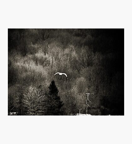 It's Lonely Out Here in Winter Photographic Print
