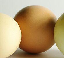 Eggs by Tom Mills