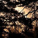 twilight by Jari Hudd