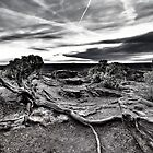Sunset Root at Dead Horse Point by rjcolby