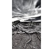 Sunset Root at Dead Horse Point Photographic Print