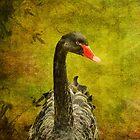 Black Swan iPhone Case by Lois  Bryan
