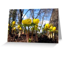 Spring Dancers Greeting Card