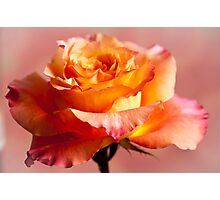 The Rose 3 Photographic Print