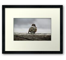 Solo bird Framed Print