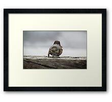 Solo bird Framed Print