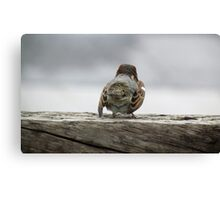 Solo bird Canvas Print