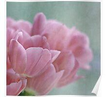 Joy of spring V Poster