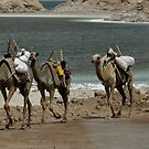 Camel Caravan by hedgie6
