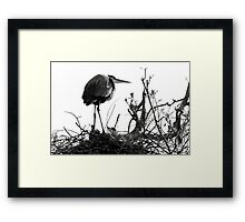 Watching Over the Youngsters Framed Print