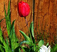 Tulips and Oak by DianaMatisz