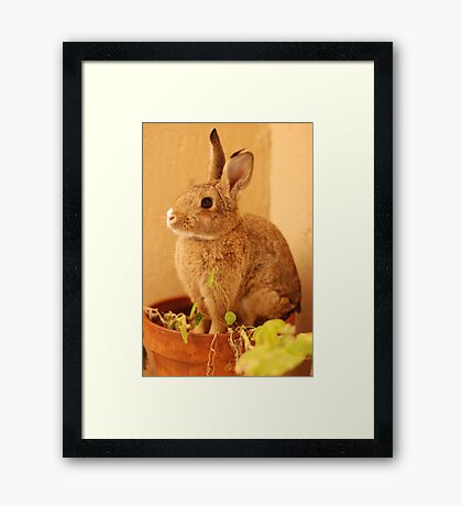 potted bun Framed Print