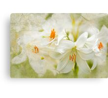 Easter Lily Dream Canvas Print
