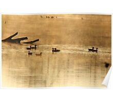 Wood ducks at sunrise Poster