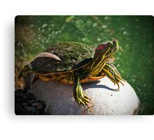 Soaking up the Sun Canvas Print