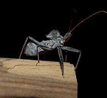 Assassin bug  by ♥⊱ B. Randi Bailey