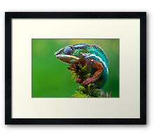 Is it a bird.... Framed Print