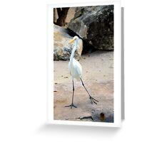 Posing Bird Greeting Card