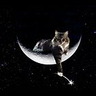Do you know where your cat is tonight? by Christina Brundage