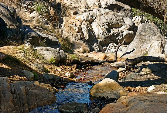 Mountain Stream by Lucinda Walter