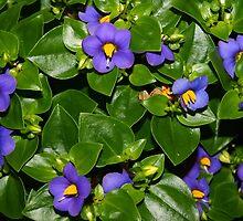 Lovely blue flowers by ♥⊱ B. Randi Bailey