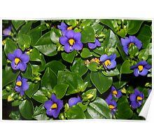 Lovely blue flowers Poster