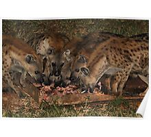 Pack of Spotted Hyena Scavenging at Night Poster
