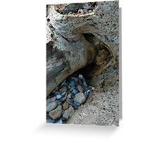 Natural History Greeting Card