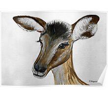 MY IMPALA BABY IN PORTRAIT - My Baba Impala Poster