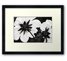 Black and White Dahlias Framed Print