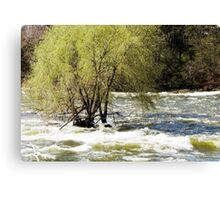Spring Willow Canvas Print