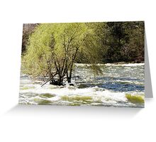 Spring Willow Greeting Card