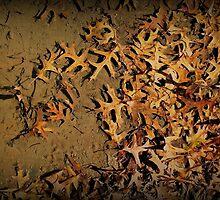 Muddy Waters by Monnie Ryan