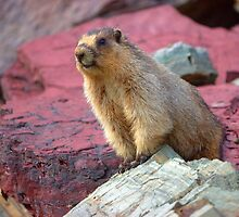 Marmot Rock by JamesA1