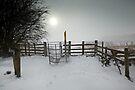 Misty Winter Walk by Andy Freer