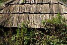 Shingle Ferns by clickedbynic