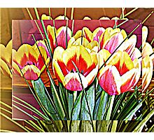 Tulips in frame Photographic Print