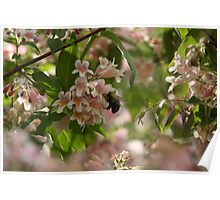 Bumble Bee in Pink Cloud Bush Poster