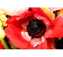 Poppy in a bouquet Photographic Print