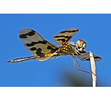 Golden Dragonfly Photographic Print