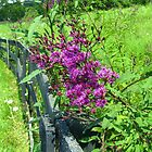 Along The Fence Line by Ron Russell