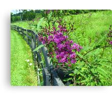 Along The Fence Line Canvas Print
