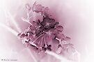 Blossom by Photos - Pauline Wherrell