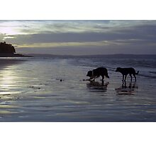 Indy and Shela on the beach Photographic Print