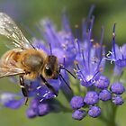 Honey Bee in Blue by Betsy  Seeton