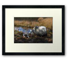 Walking free,  new born lambs Framed Print