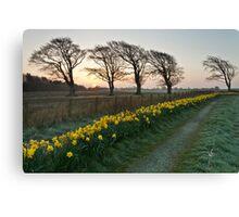 Spring Dawn Canvas Print