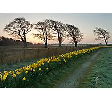Spring Dawn Photographic Print
